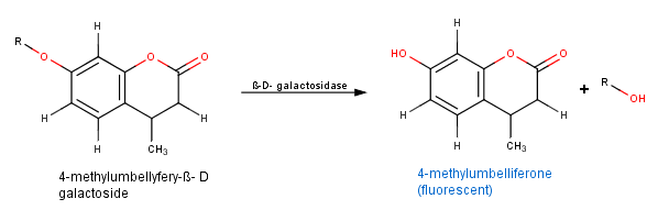 4-methylumbelliferyl--D-galactoside